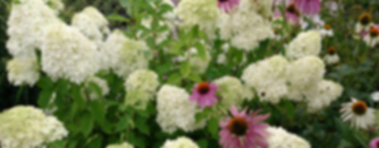 Pflanzplanung Hotelzufahrt Chiemsee Blumen & Gärten Moderner Garten
