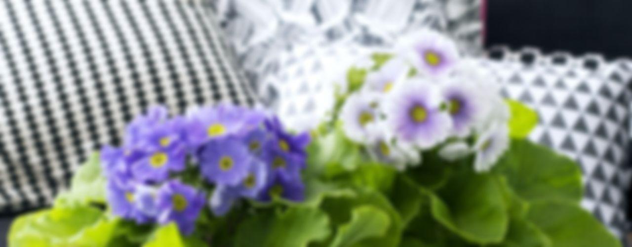 Pflanzenfreude.de SalonesAccesorios y decoración