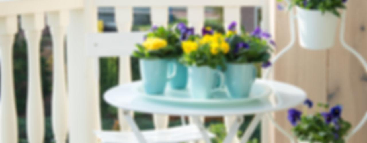 Pflanzenfreude.de 발코니, 베란다 & 테라스식물 & 꽃