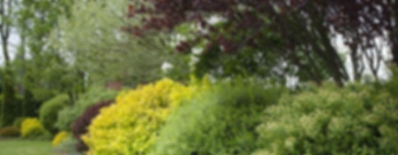 Pink Pug Design Interior Mediterranean style garden