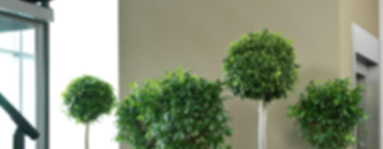 fleur ami GmbH Paysagisme d'intérieur