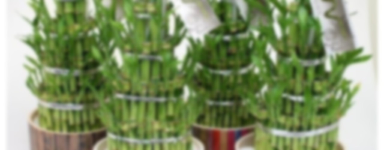 Using plants to help Feng Shui in the home Perfect Plants Ltd Paisajismo de interiores Fibra natural Verde
