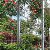 花壇の家: ユミラ建築設計室が手掛けた庭です。