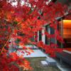 嵯峨二尊院の家: 株式会社ローバー都市建築事務所が手掛けた庭です。