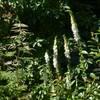 Geißbart und Fingerhut im Waldbeet: landhausstil Garten von KAISER + KAISER - Visionen für Freiräume GbR