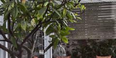 casa Limonero: Terrazas de estilo  por MARIANGEL COGHLAN