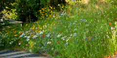 Wildflower Seed Meadow with Sleeper steps: country Garden by Katherine Roper Landscape & Garden Design