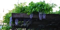 Cubierta vegetal:  de estilo  de Slabon  Forja Creativa