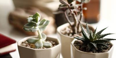 Suculenta en maceta de cerámica:  de estilo  por Kentia Decosustentable