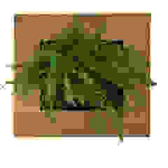 Small Oak - Vertical Garden Living Interiors UK ArtworkOther artistic objects