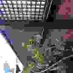 Palos en Danza Balconies, verandas & terraces Accessories & decoration