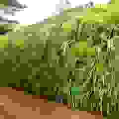 Tropical style gardens by Quadro Vivo Urban Garden Roof & Vertical Tropical