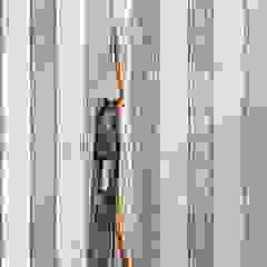 TapetenStudio.de Стіни & ПідлогиШпалери