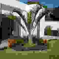 Tropical style gardens by Vivero Sofia Tropical