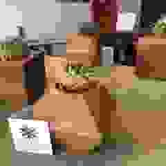 Decora espacios con verde! de BAWI Moderno Madera maciza Multicolor