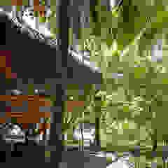 Universo Pol - Morro de San Pablo Paredes y pisos tropicales de IR arquitectura Tropical Bambú Verde
