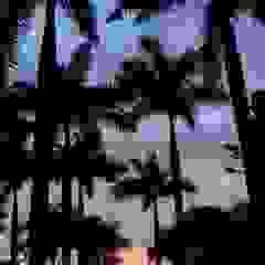 Tropical America landscaping สวน