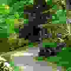 Jardin tropical par BR ARQUITECTOS Tropical