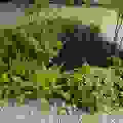 Vườn phong cách chiết trung bởi Atelier Jardins do Sul Chiết trung