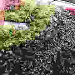 Rustic style gardens by Verde & Verde Ingenieros & Arquitectos SAS Rustic