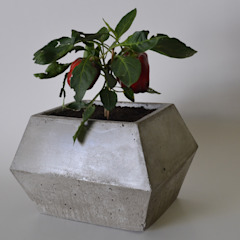 BODOQUE - Diseño en Concreto Внутрішнє озеленення Сірий