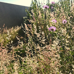 meadow planting Country style garden by Acton Gardens Country