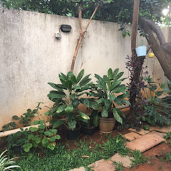 Tropical style garden by Cherry Garden and Landscapers Tropical