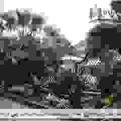 Tukang Taman Jakarta Barat Oleh Dua Putra Landscape Mediteran