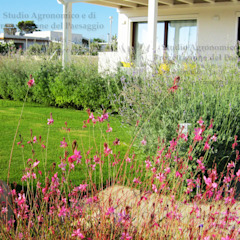 Jardines de estilo mediterráneo de Alessandro Lutri - Agronomo Paesaggista Mediterráneo