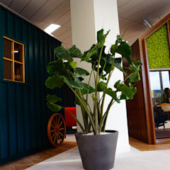 من Green Lab Design إستوائي