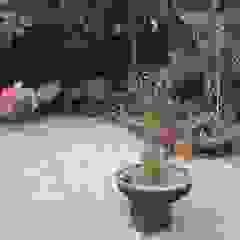 by Garden master limitada Asian
