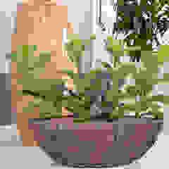 de BAUMHAUS GmbH Raumbegrünung Pflanzenpflege Mediterráneo