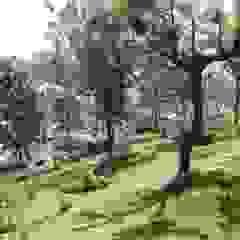 Fairview Asian style garden by Vitrag Group Asian