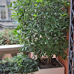 Progettazione e realizzazione terrazza con fioriere su misura Mattia Boldrin Garden Design Balcone, Veranda & Terrazza in stile moderno