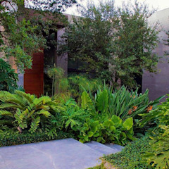 Canelo exteriores Front yard Green