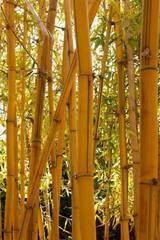 Best4hedging: asyatik tarz tarz Bahçe