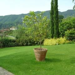 Nuovo giardino con piscina in collina : Giardino in stile  di Studio Green Design