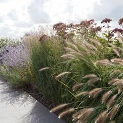 minimalistic Garden by Andrew van Egmond (ontwerp van tuin en landschap)