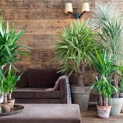 Pflanzenfreude.de SalonAkcesoria i dekoracje