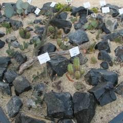 Сад камней в . Автор – Andreae Kakteenkulturen