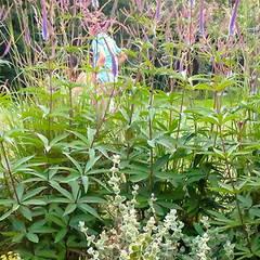 Barn Conversion Country Garden Jardines de estilo rural de Rosemary Coldstream Garden Design Limited Rural