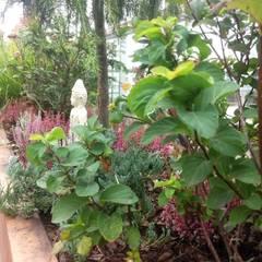Ogród na dachu z nutką orientu Kolonialny balkon, taras i weranda od GREENERIA Kolonialny