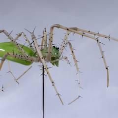 Green Lynx Spider:  Museums by Neil Wilkin Bespoke chandeliers & Glass Sculpture
