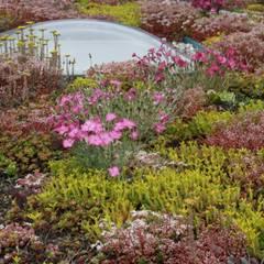 Garden by De Dakdokters