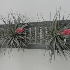 Dïst Airplant Zink:  Serre door Dïst Dutch Design
