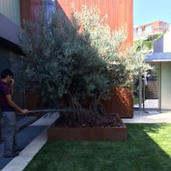 abelia peyzaj – abelia'dan karler: minimal tarz tarz Bahçe