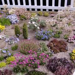 Create a colourful alpine garden.:  Garden by Ice Alpines