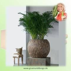 CEMANI ROUND mit Chrysalidocarpus lutescens:  Hotels von grün+design
