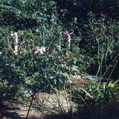 プラス・ワンルーム: 大成優子建築設計事務所が手掛けた庭です。