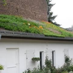 Intensiv Dachbegrünung Bauernhof:  Häuser von Nagelschmitz Garten- und Landschaftsgestaltung GmbH
